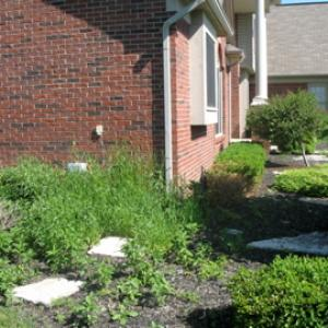 Spring Cleanup Before Photo (example 2)